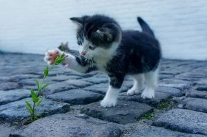 Kitten playing with a flower