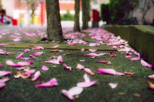 lotus flowers on the ground