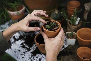 Preparing your plants for the move