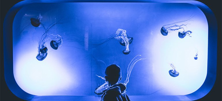A kid looking at an aquarium