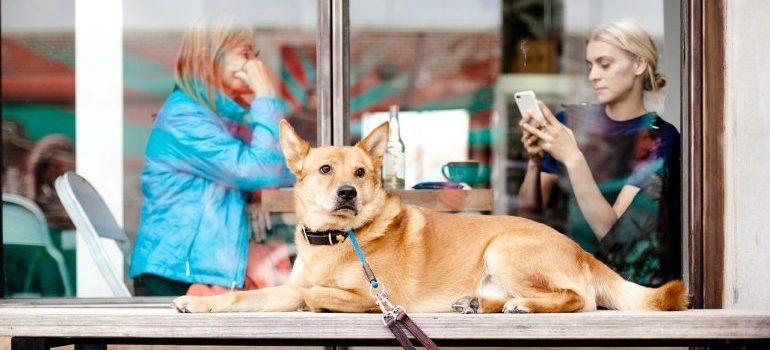 leashed dog lying outside a cafe