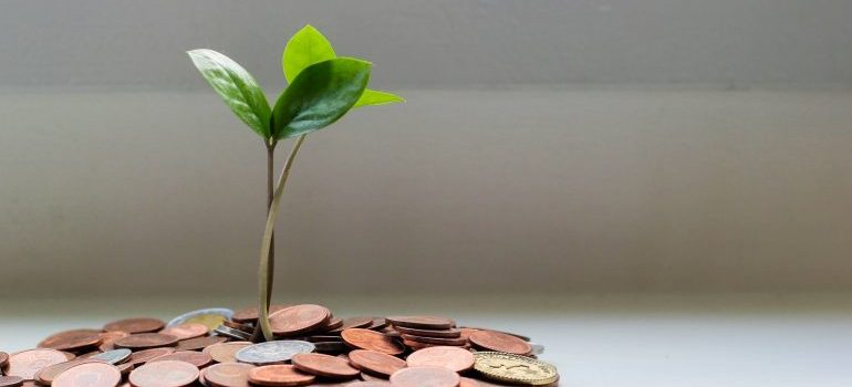 coins and a plant - renting storage in Allen TX on a budget