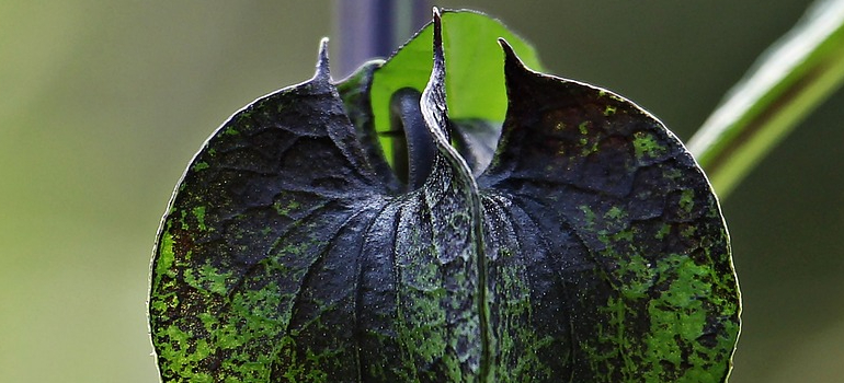 a sick house plant