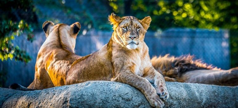 Spend a day in Fort Worth Texas Zoo