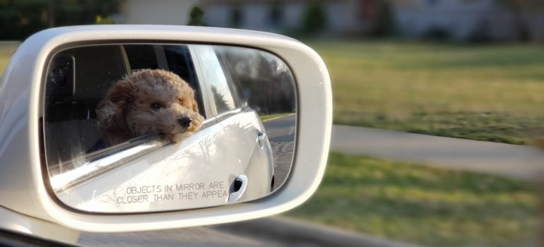 Dog on the passenger seat.