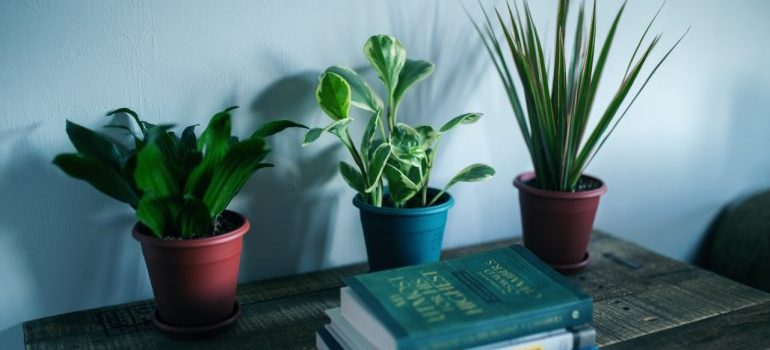 Plants on the table