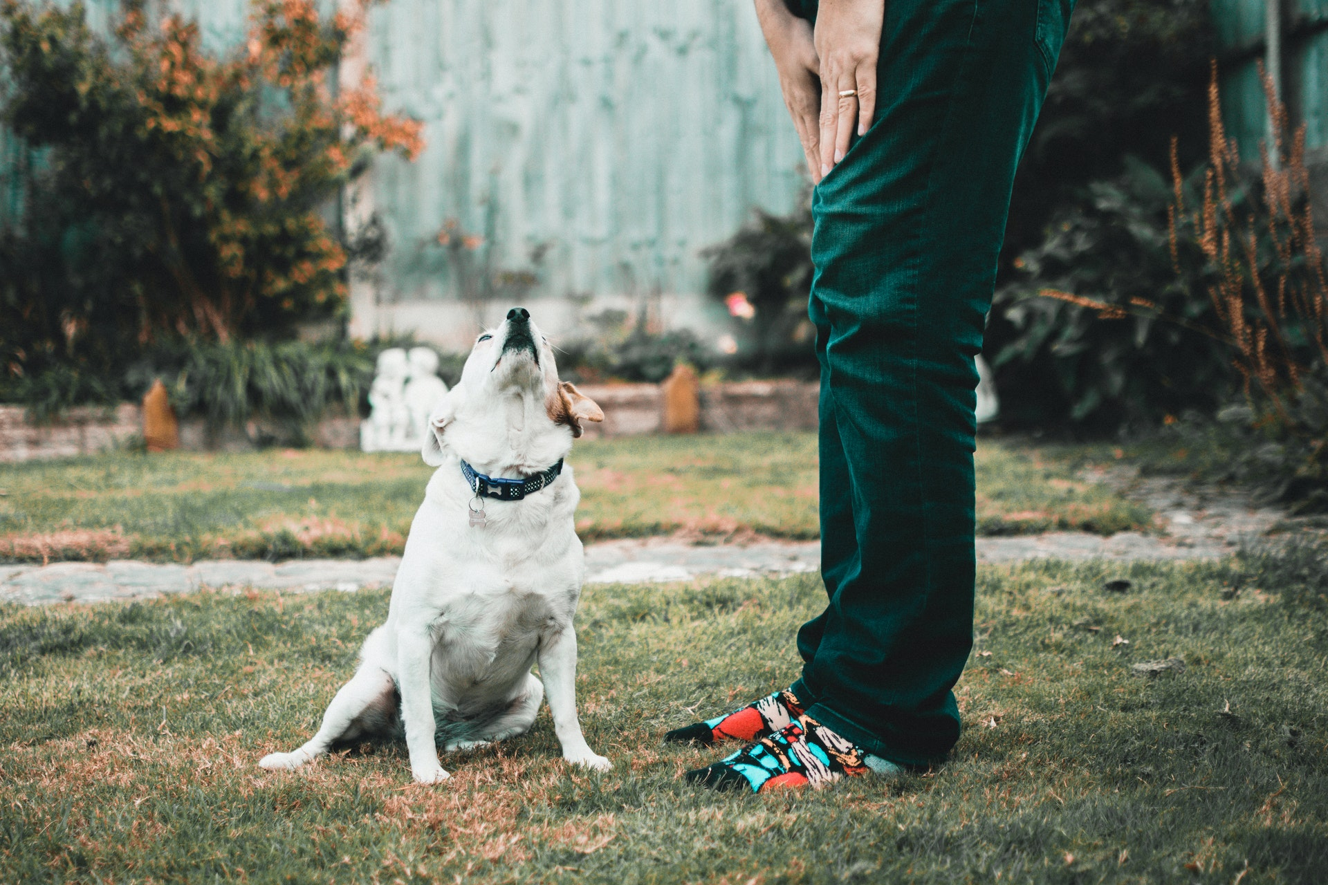 Moving to Allen with a pet – is it a good idea?