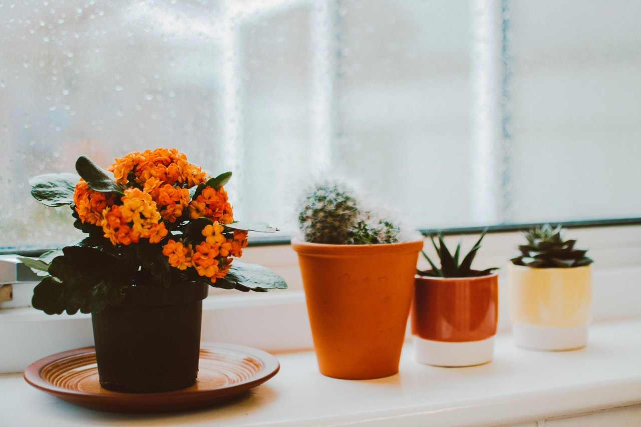 How to arrange your plants after moving?